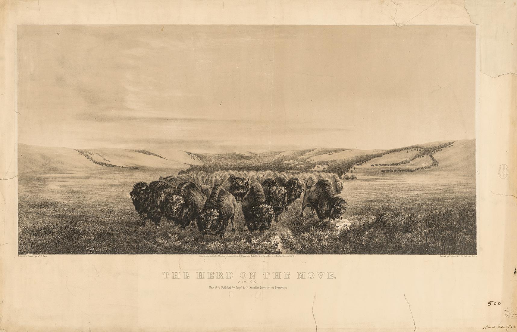 hays-herd-move-big